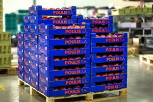 Apple Packaging | POULIS S.A. | FRESH FRUITS AND VEGETABLES | ΠΟΥΛΗΣ Α.Ε.