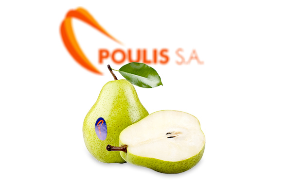POULIS S.A. | Premium Quality Pears | Available Pears Varieties : Kristalia, Highland, Williams, Santa Maria, Coscia, Kontoules, Blanquilla | Sources : Tirnavos, Korinthia, Lakonia – Greece, Spain | POULIS S.A. | FRESH FRUITS AND VEGETABLES | ΠΟΥΛΗΣ Α.Ε.