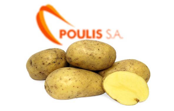 POULIS S.A. | Premium Quality Potatoes | Available Potato Varieties : All Potatoes varieties | Sources :Egypt | POULIS S.A. | FRESH FRUITS AND VEGETABLES | ΠΟΥΛΗΣ Α.Ε.