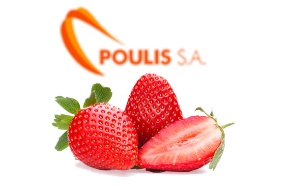 POULIS S.A. | Premium Quality Strawberries | Available Strawberry Varieties : Camarossa, Ventana, Cartoga, Festival | Sources : Ilia-Greece | POULIS S.A. | FRESH FRUITS AND VEGETABLES | ΠΟΥΛΗΣ Α.Ε.